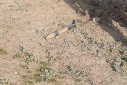 اصابت۵۰ راکت جنگ قرهباغ به روستاهای خداآفرین/خسارت به۳۲واحدمسکونی