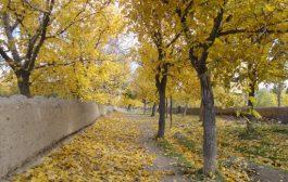 بازی رنگ ها و برگ ها در خزان تسوج + تصاویر