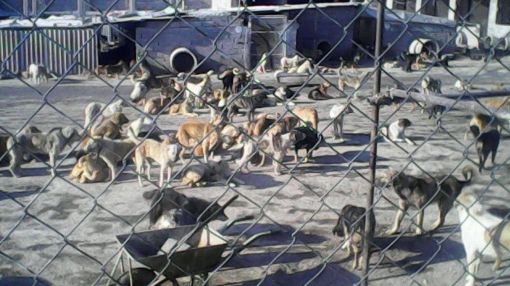 درخواست فعال فرهنگی از استاندار: جلوی سگ کشی را بگیرید!